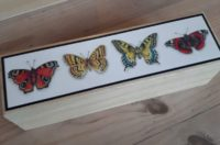 Butterfly pencil box