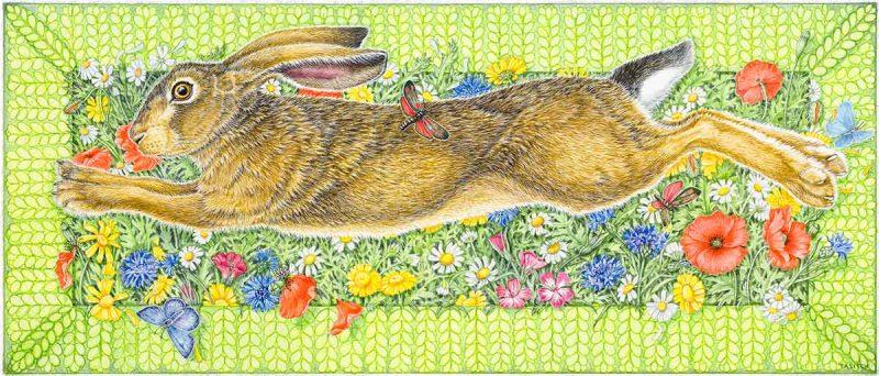 Cornfield Hare