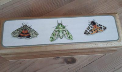 Moth pencil box