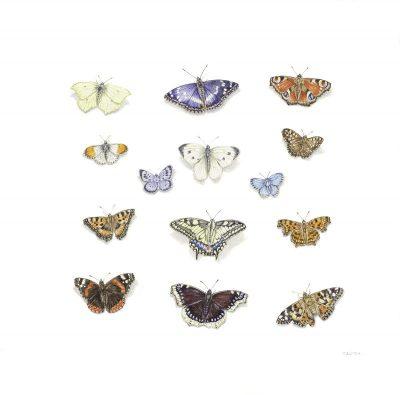 No Butterflies Were Harmed...