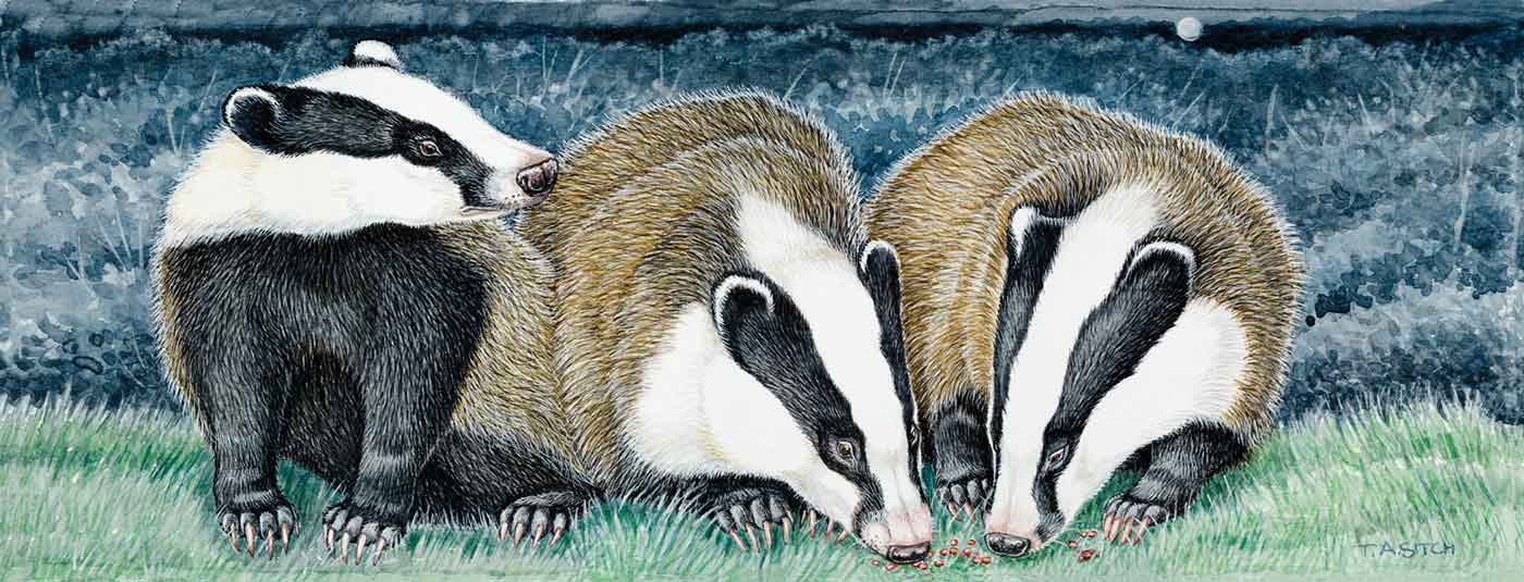 Badgers in the moonlight