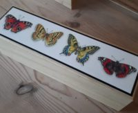 Pencil box Butterflies 1