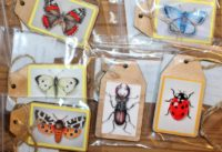 gift tag insects