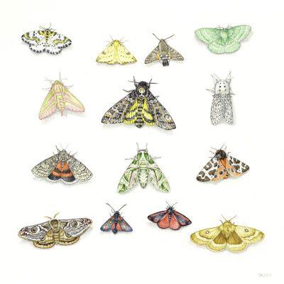 moths large file
