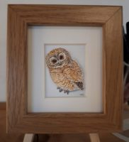 mini framed print tawny owlet